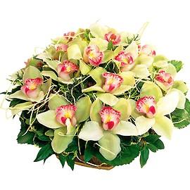 Корзина с орхидеями Созвездия